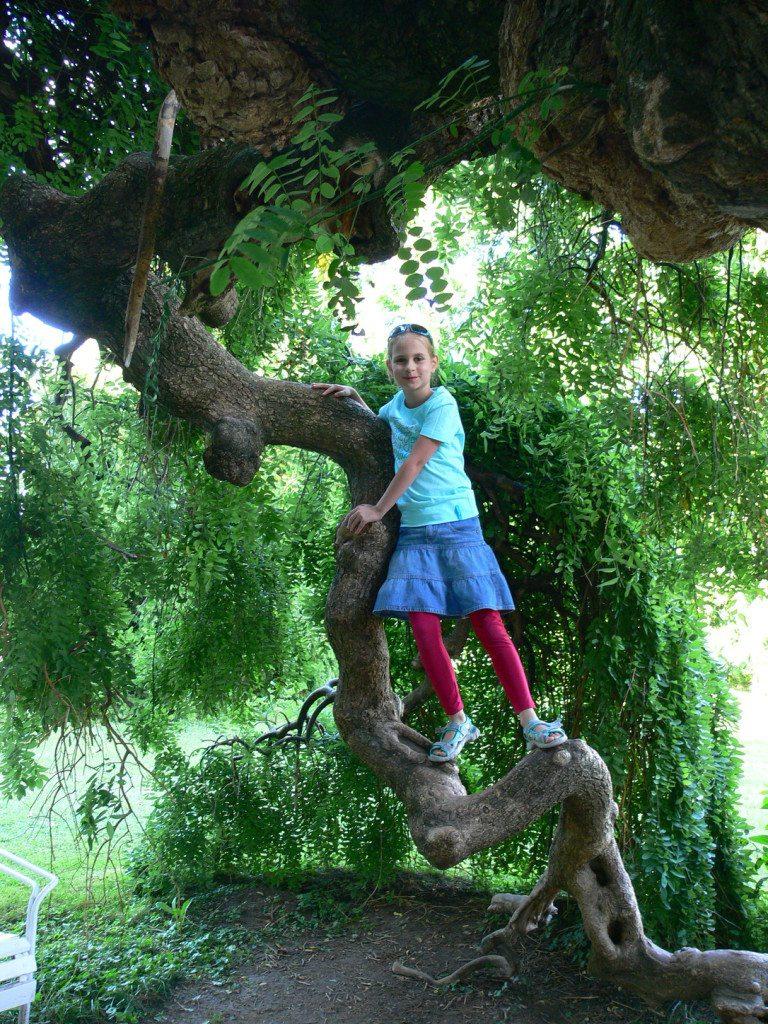 Jeney-Till Szonja - 8 éves